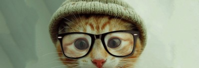 Cat pics for all thumbnail